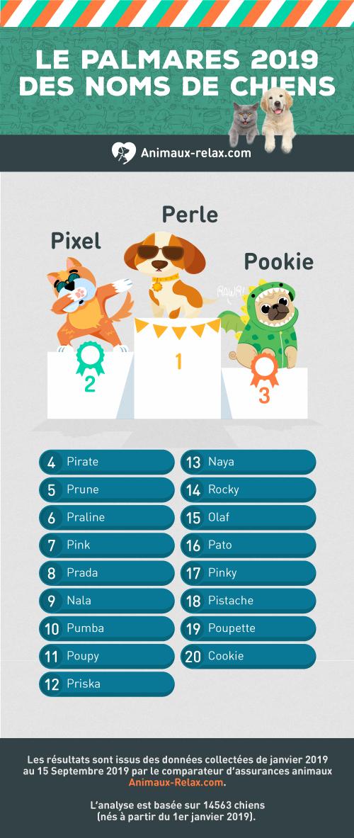 Noms de chiens populaires en 2019